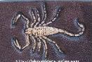 scorpion martelé sur cuir tanné vegetal teinté noir antique motif incrusté frappé