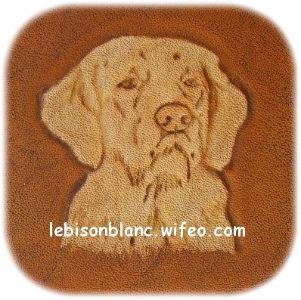 repoussage sur cuir dessin tête de golden retriever repoussé à la main teinté ocre orangé sur cuir tanné vegetal
